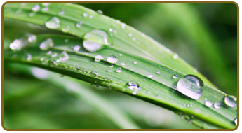Water Drop in Woodbridge and Manassas VA